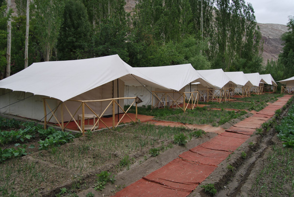 Resort Tents & Krishna Tents | Resort Tents